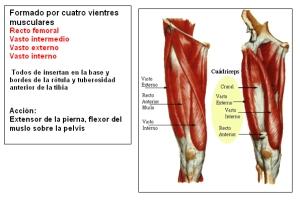 cuadriceps