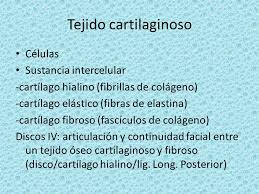 cartilagoh
